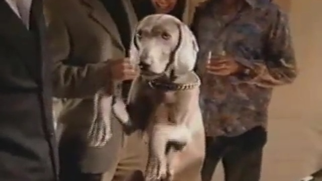 smirnoff dog